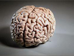 Нейропротекторы способствующие восстановлению работоспособности клеток